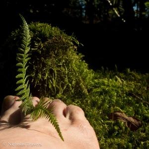 Moss Feeling