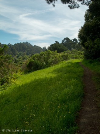 sweet trail through the berkely hills, along the ridges. Near grizzly peak I believe.