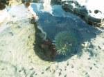 sea creature's hidaway