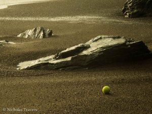 Tennis ball driftwood