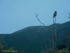 Owl Farewells