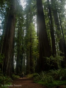 Standing in a small ray of Sunshine amongst the Redwoods of Jedediah Smith National Park