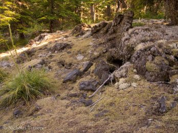Dry moss and lichens facilitates soil establishment on the lava beds.