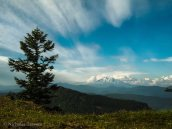The cirrus led to great views of a still cumulous enveloped Mt Adams.