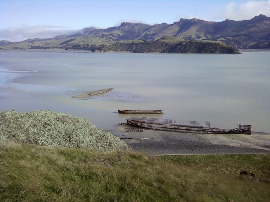 Sunken Ships of Quail Island in Littleton Harbour outside of Christchurch, NZ