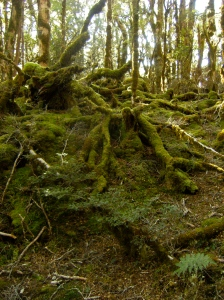 such a mossy, wild, land