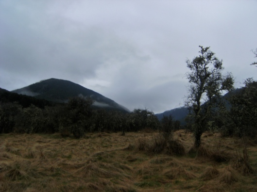 The Doubtful Valley, matted grass and stunted trees