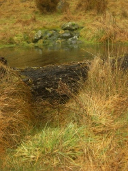 a Little stream up the Doubtful Valley, with pond and waterfall