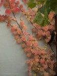 autumn, change, passing, wechslung, herbst, sehnsucht,
