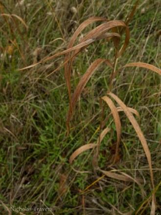 Grass at Burns Farm