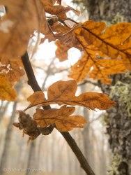 Leaves 10.25