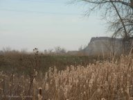 Valmont Butte over cat tails