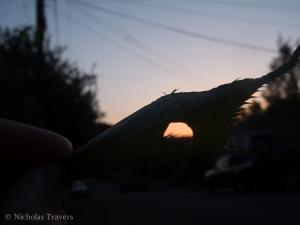 my sun