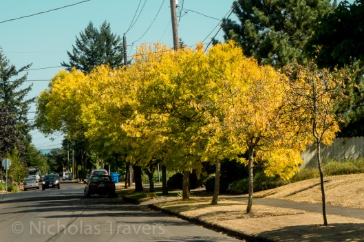 First Fall on the Portland Streets