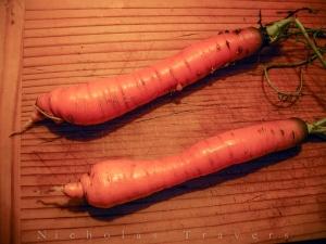 0107_carrot-0179