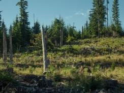 Fresh Timber Cuts