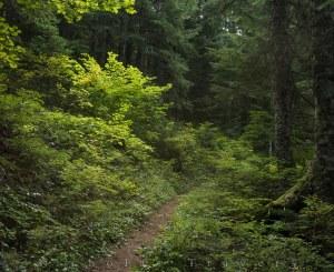 Columbia River Gorge National Scenic Area  -- Pacific Crest Trai