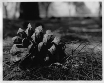 - Landscapes - Street Photography - Nature - - Sculpture - Still Life - - film - 35mm - medium format - large format 4x5 -