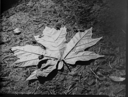 2014, Leaf, Paper Negative
