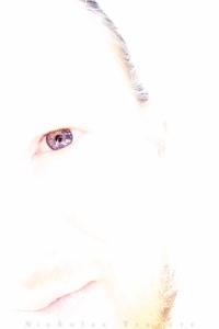 Self portrait, high key free lens - March 2015