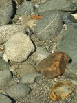 shore and rocks of the klamath river