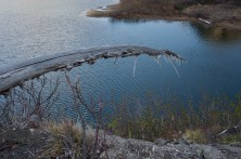 snag extends over Panhandle lake, a gesture