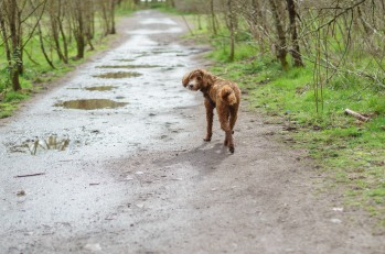0322_NicholasTravers_A Sandy Dog Walk_02737