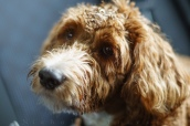 0322_NicholasTravers_A Sandy Dog Walk_02754