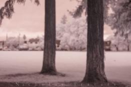 Alberta Park: tree forward, tree back