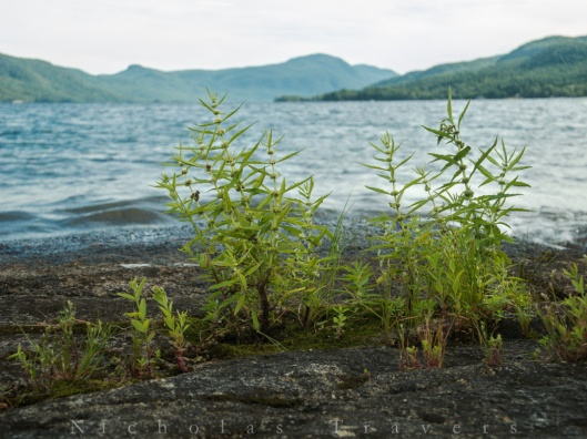 0808_nicholastravers_black-mountain-from-hague-islands-on-lake-george_1541
